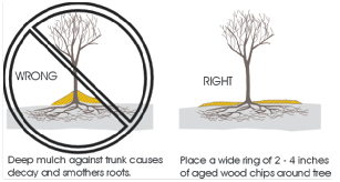 Mulching Diagram tree care tips muskego, wi Skid Steer Forestry Mulcher Rental at eliteediting.co